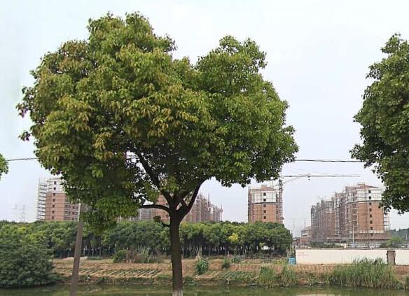 张家港仓基花苑
